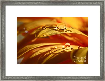Glowing Amber Framed Print by Tracy  Hall