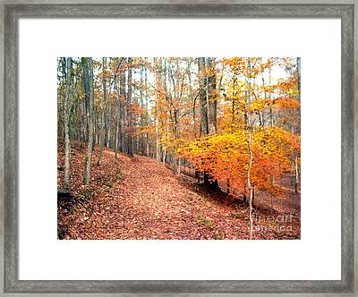 Framed Print featuring the photograph Glowing Beeches by Gretchen Allen