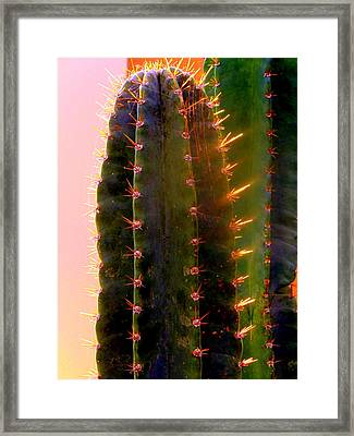 Glowing Cactus Framed Print by Mindy Newman