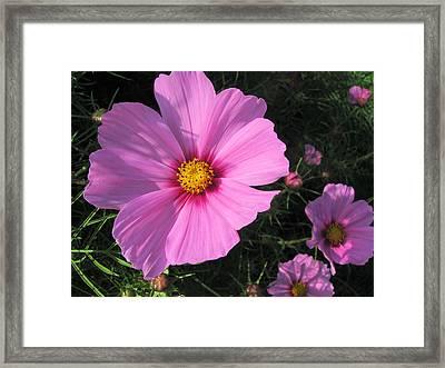 Glowing Cosmos Framed Print