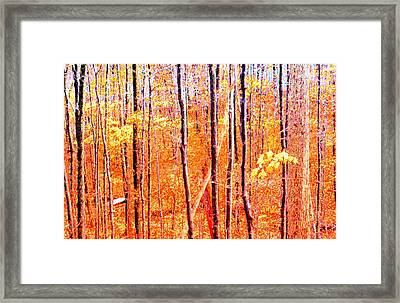 Glowing Forest  Framed Print by Lyle Crump