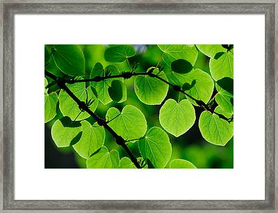 Glowing Heart Shaped Leaves Framed Print by Hegde Photos