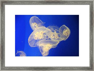 Glowing Jellyfish 3 Framed Print by Karen Nicholson