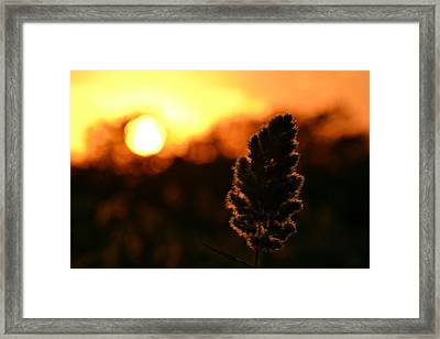 Glowing Leaf Framed Print by Zawhaus Photography