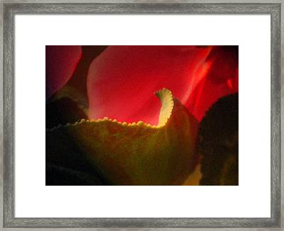 Glowing Petals Framed Print