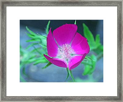 Glowing Poppy Framed Print by Becky Lodes