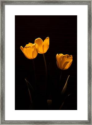 Framed Print featuring the photograph Glowing Tulips by Ed Gleichman