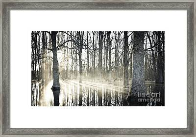 Glowing Woods Framed Print