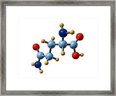 Glutamine, Molecular Model Framed Print by Dr Mark J. Winter