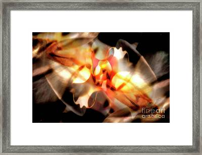 Gmelina Explosion Framed Print by Keith Kapple