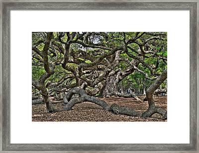 Gnarled Framed Print by Andrew Crispi