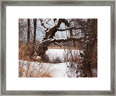 Gnarled Tree By Lake Chipican Framed Print