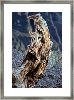 Gnarled Tree Stump Framed Print by Rod Jones