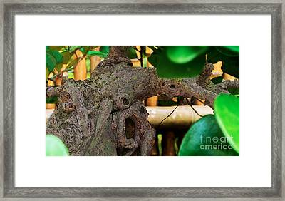 Gnarly Trunk Framed Print