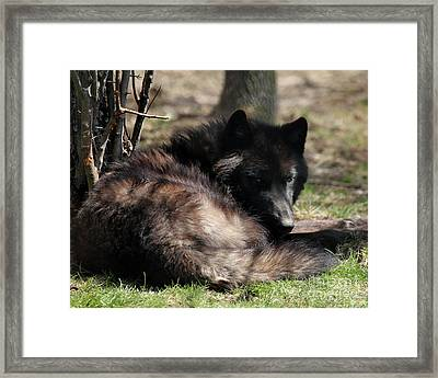 Go Away It's My Nap Time Framed Print