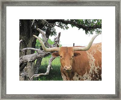 Framed Print featuring the photograph Go Bevo by Shawn Hughes