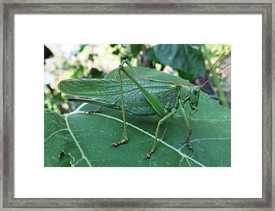 Go Green  Framed Print by Eric Kempson