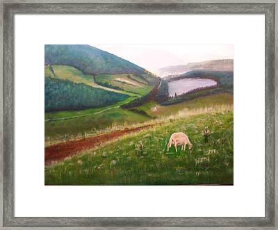 Goat On Welsh Mountain Framed Print by Malcolm Clark