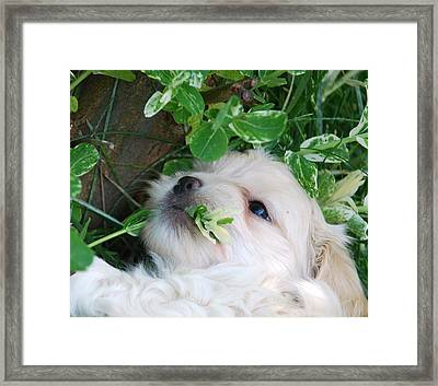 Going Green Framed Print by Lisa  DiFruscio