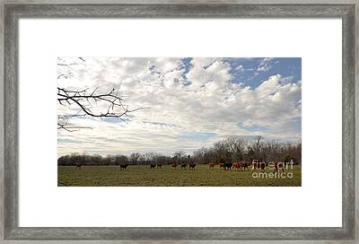 Framed Print featuring the photograph Going Home by Cheryl McClure