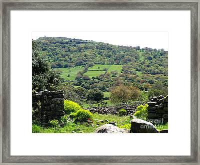 Golan Bushes Framed Print by Issam Hajjar