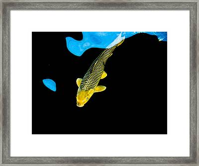 Gold Chagoi01 Framed Print