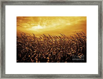 Gold Country Framed Print