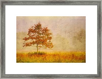 Gold Framed Print by Debra and Dave Vanderlaan