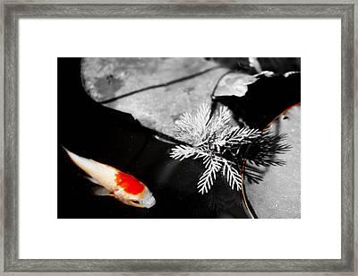 Gold Fish Black And White Framed Print