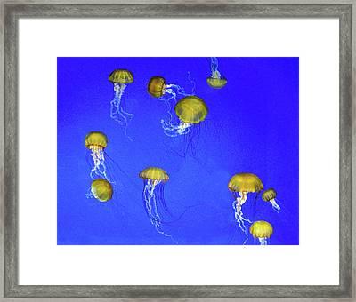 Gold Jelly Swarm Framed Print