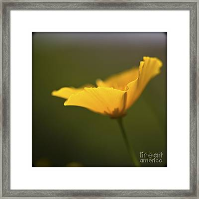 Golden Afternoon. Framed Print by Clare Bambers