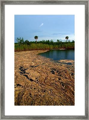 Golden Algae Framed Print by Jessica Jandayan
