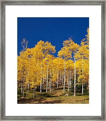 Golden Aspen Stands Framed Print by Stephen  Johnson
