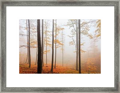 Golden Autumn Forest Framed Print by Evgeni Dinev