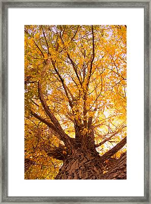 Golden Autumn View Framed Print by James BO  Insogna