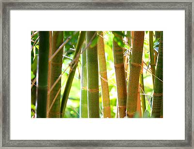 Golden Bamboo Framed Print