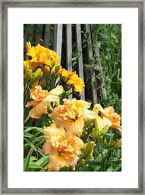 Golden Blossoms Framed Print