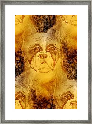 Golden Boxer Framed Print by Maria Urso