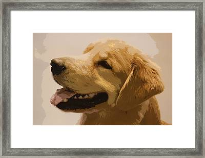 Golden Boy Framed Print by Donna G Smith