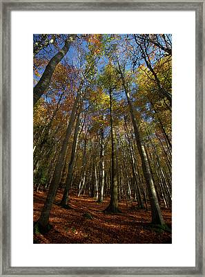 Golden Canopy Framed Print