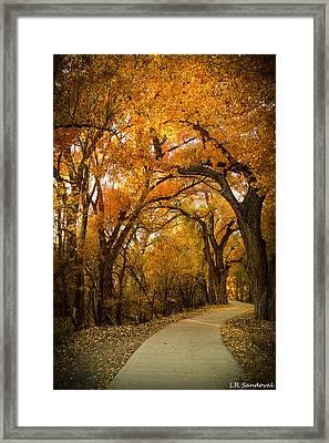 Golden Canopy Framed Print