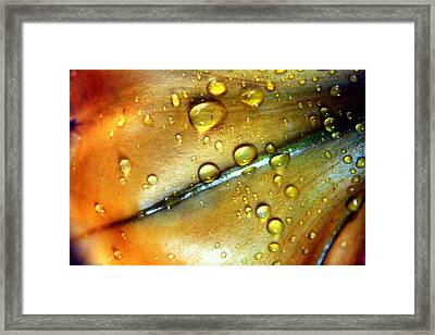 Golden Cup Flower Study 3 Framed Print by Jennifer Bright