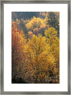 Golden Days Framed Print by Gary Suddath