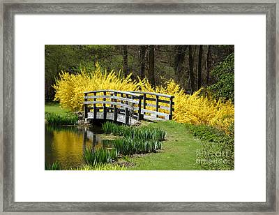 Golden Days Of Spring Framed Print
