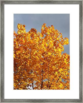 Golden Days Framed Print by Will Borden
