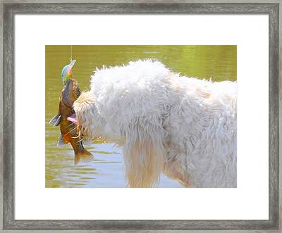 Golden Doodle And Goggle Eye Framed Print by Betty Berard