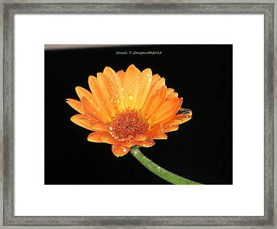 Golden Droplets Framed Print