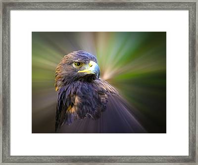 Golden Eagle Fade Framed Print by Steve McKinzie