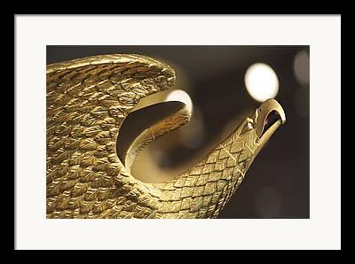 Golden Eagle Framed Prints