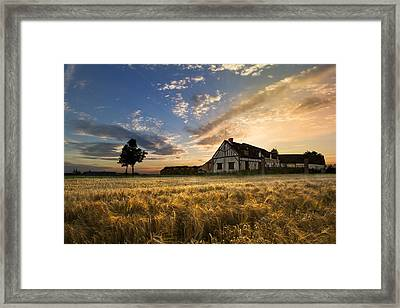 Golden Evening Framed Print by Debra and Dave Vanderlaan